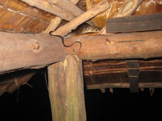 Tetepare Island Eco-lodge: Room mate