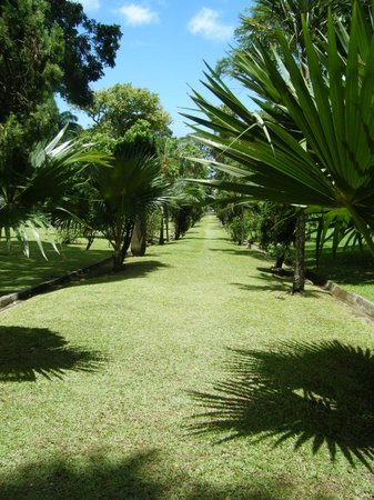 Botanical Gardens: the Wedding Walk