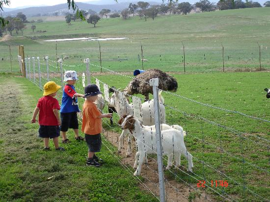 Bathurst Sheep and Cattle Show: The mini zoo was a great hit with all the kids.