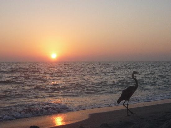 Periwinkle Cottages of Sanibel: A Heron on the Beach at Sunset