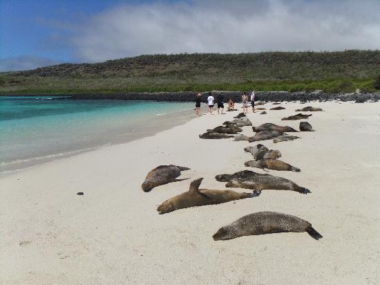 Finch Bay Eco Hotel: Colonia de lobos marinos en Isla Sta. Fé, Galápagos.