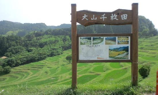 Oyama Rice Terraces: 大山千枚田