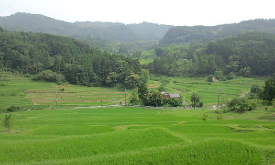 Oyama Rice Terraces: 大山千枚田2