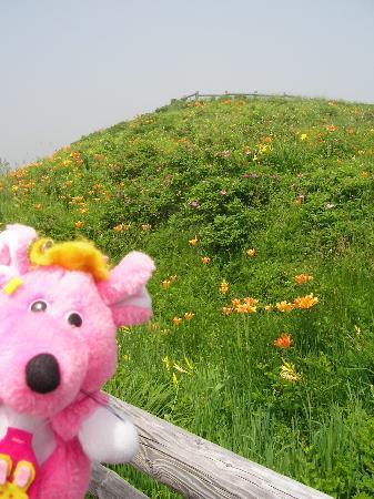 Koshimizu-cho, Japón: 緑に映える可憐な花々