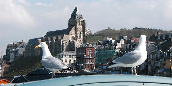 Seine-Maritime, Frankrig: les goelands
