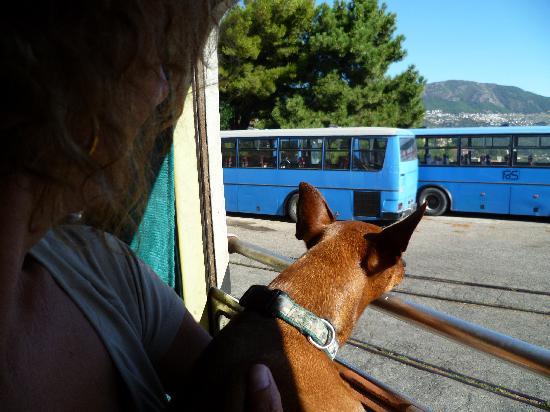 Cooperativa Grotte Taquisara: anche i cagnolini sono ammessi!