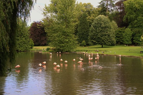 Parc de Cleres: Flamingos no lago