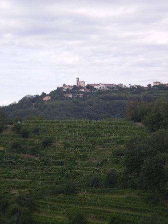 Vino In Turizem Stekar : Blick vom Zimmer aus nach Smartno
