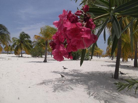 Sol Cayo Largo: la playa sirena
