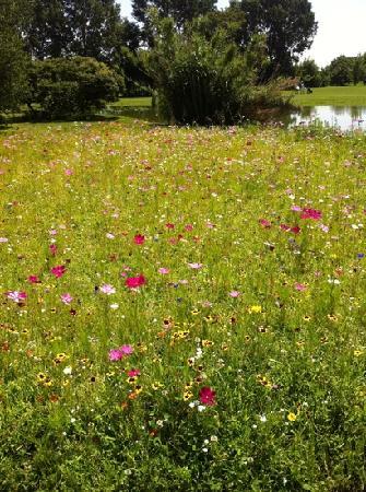 Golf Hotel: Buca 17 - fiori di campo