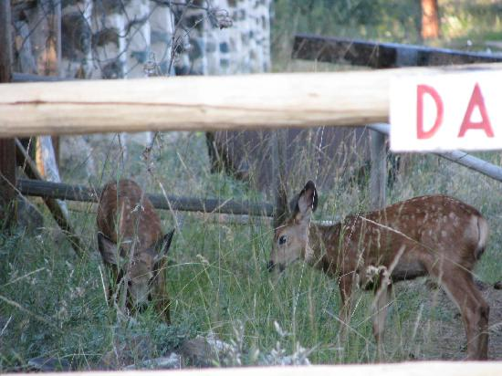 Princeton Castle Resort: Fawns playing in the ruins.