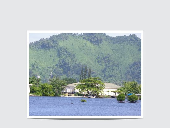 Kosrae, Micronésia: Pine Trees in the Tropics