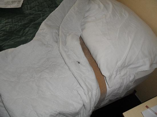 Ramada Plaza Fort Lauderdale: soiled sheets