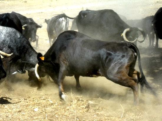El Añadio: feeding time can get testy