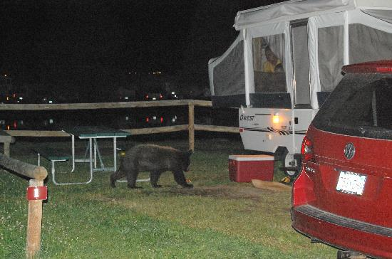 Spruce Lake RV Park: Getting Himself Into Trouble