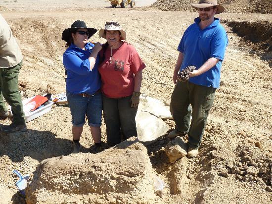 Australian Age of Dinosaurs: Tibia and Fibula froma giant sauropod