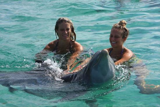 Tropical Princess Beach Resort & Spa: Daughters swam w/ Dolphins & Sharks