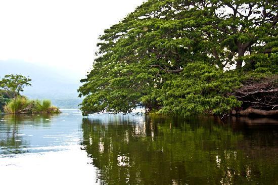Jicaro Island Ecolodge Granada: Scene from the kayak