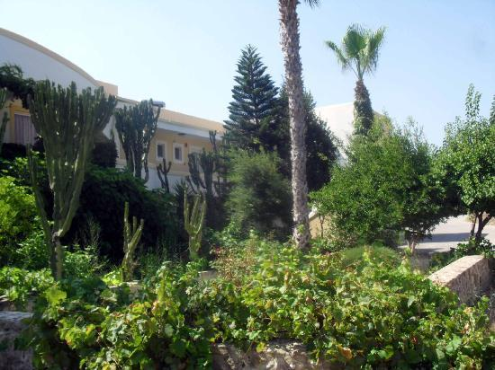 Afentoulis Studios: Afentoulis gardens