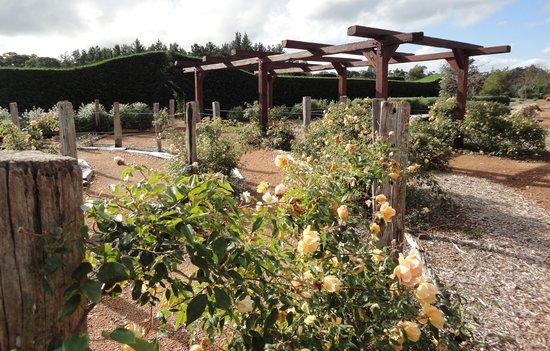 Amaze'n Margaret River: Rose maze