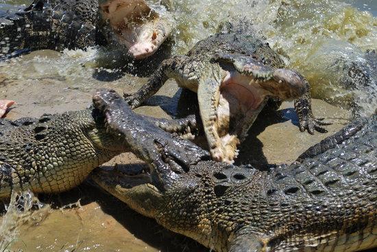 斗亚兰鳄鱼养殖场