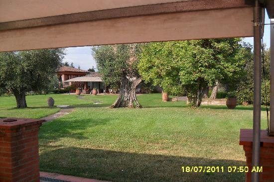 Locanda Poggioleone: Ulivi secolari nel parco