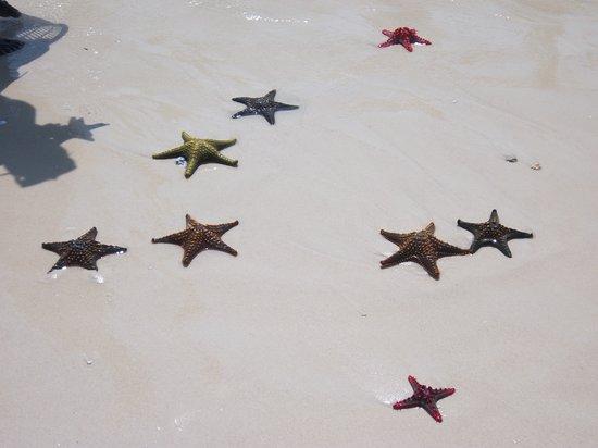 Sunset Beach Resort Zanzibar: Stelle marine a Prison Island