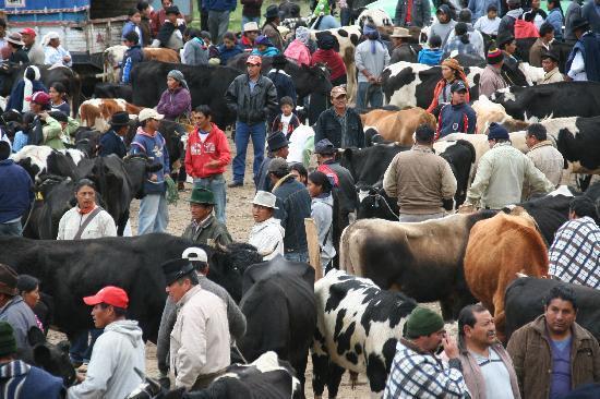 Hotel Otavalo: Otavalo saturday animal market
