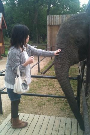 Akiyoshidai Safari Land : ぞうさんに餌もあげれます(有料)