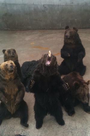 Akiyoshidai Safari Land : エサをキャッチする熊