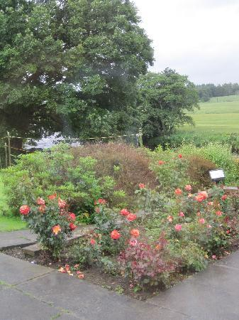 Forbes Arms Hotel: Rose Garden, Forbes Arms