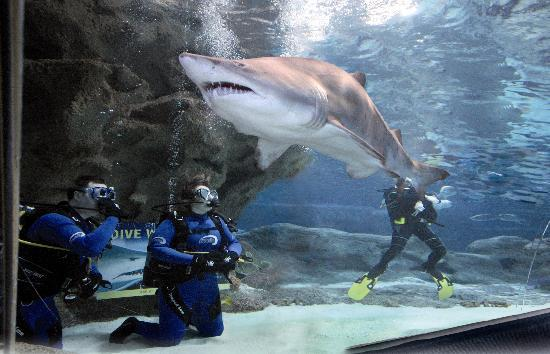 Ellesmere Port, UK: Sharks at Blue Planet Aquarium