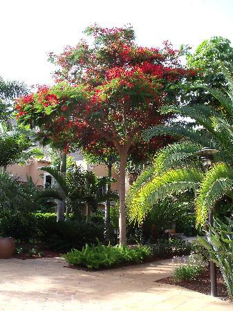 Cordial Mogan Playa: Beautifully manicured gardens