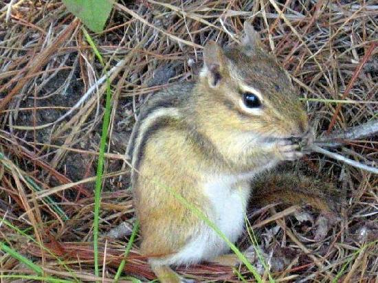 Lake Forest RV Resort : Lots of wildlife at LFR