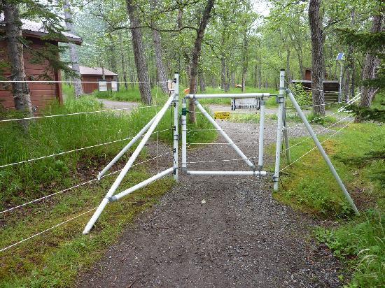 Brooks Camp: L'ingresso principale del campeggio. Le strutture in legno sono tettoie con tavoloni al riparo d