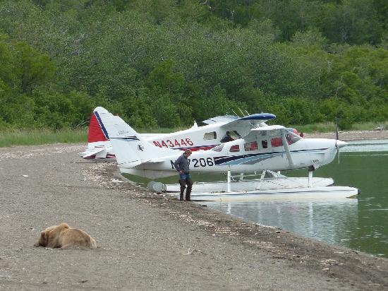 Brooks Camp: Un orso dorme sulla riva del lago Naknek. Il campeggio è nascosto dagli alberi sullo sfondo