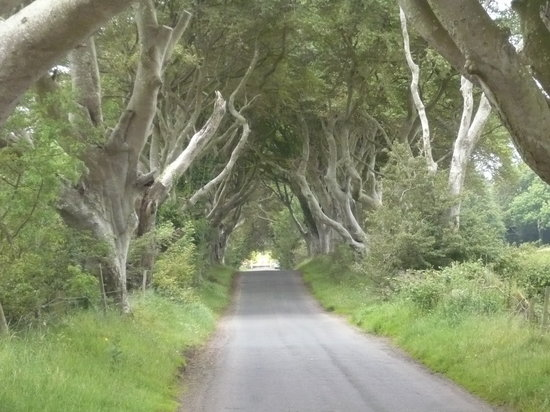 ‪The Dark Hedges‬