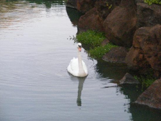 sammy swan