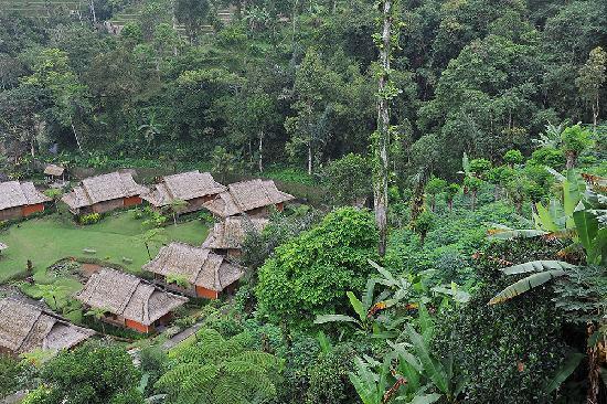 Saranam Eco Resort Bali : Partial view of the bungalows