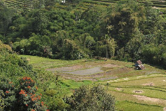 Royal Tulip Saranam Resort & Spa: Rice terraces seen from the restaurant