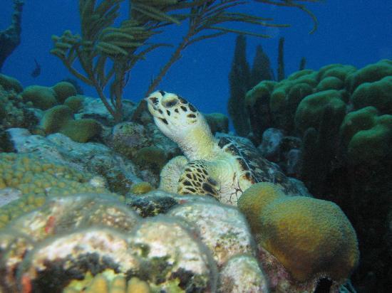 Tradewind Guest Suites on Salt Cay: Diving