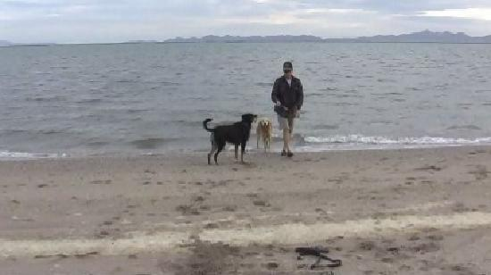 Hacienda Del Sol: A walk on the beach with our furry four-legged boys
