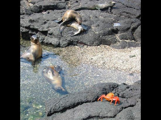 Swissotel Quito: Sea lions on Galapagos cruise