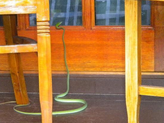 Perhentian Island Resort: serpente sulla finestra della mia camera