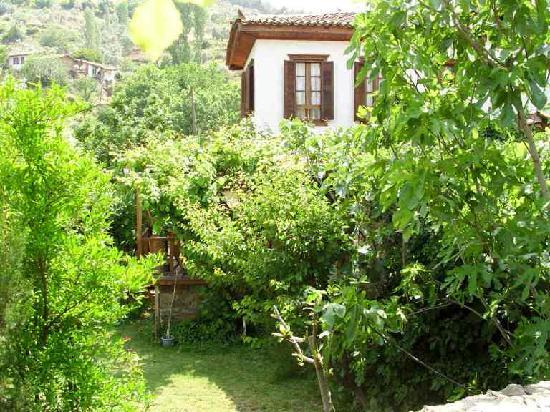 Grapevine House: garden