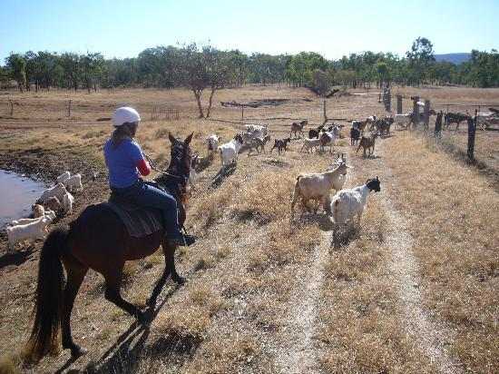 Kroombit Park: On the goat muster
