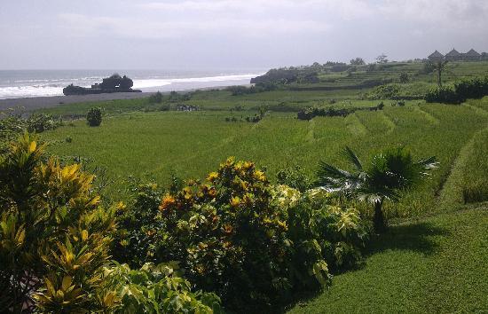 Bali Wisata Bungalows: Vue du restaurant