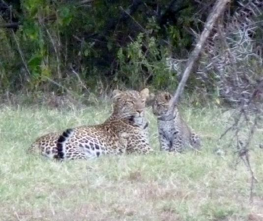 Porini Mara Camp: And their were two cubs!