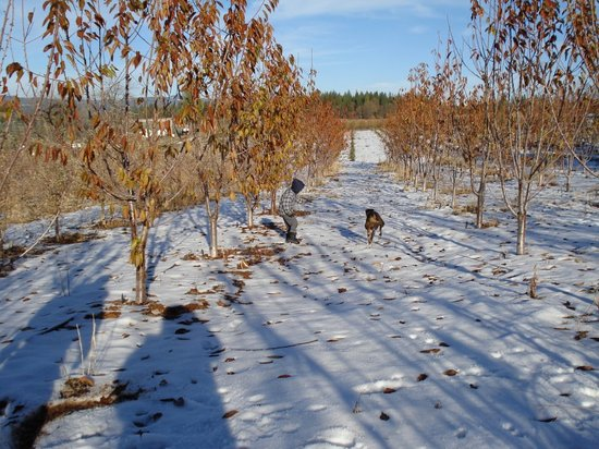Boa Vista Orchards : Apple snow!