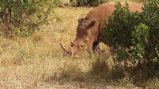 Fairmont Mara Safari Club: Purtroppo ne rimangono pochi